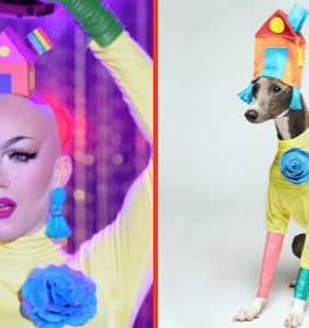 Who wore it best… Sasha Velour or this dog?