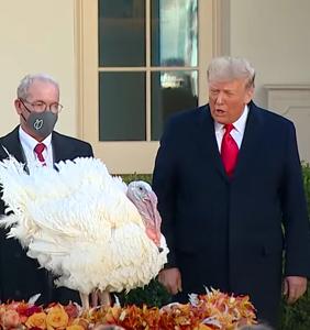 WATCH: The moment after Trump pardoned turkey, reporter asks if he'll pardon himself