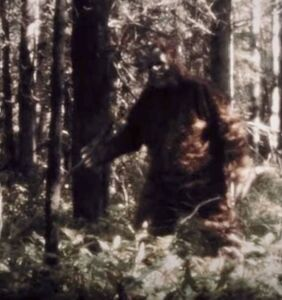 Meet a bigfoot-hunting gay couple, and step into a captivating murder mystery