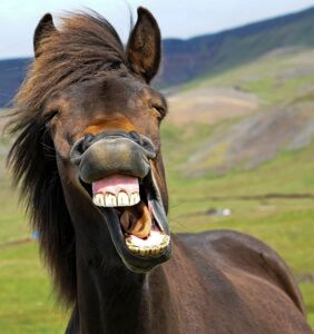 FDA warned a horse drug will not cure COVID-19. Oklahoma just sold out of it.